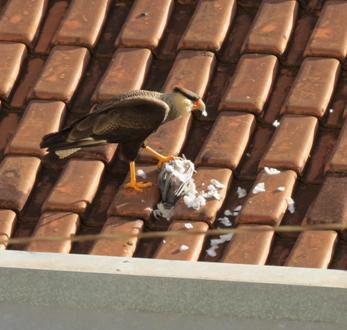 http://www.noticiasespiritas.com.br/2020/JANEIRO/04-01-2020_arquivos/image019.jpg