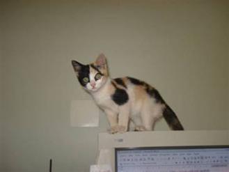 http://www.noticiasespiritas.com.br/2012/JUNHO/08-06-2012_arquivos/image019.jpg