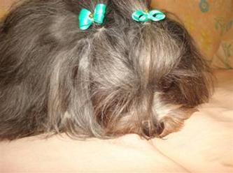 http://www.noticiasespiritas.com.br/2012/JUNHO/08-06-2012_arquivos/image020.jpg