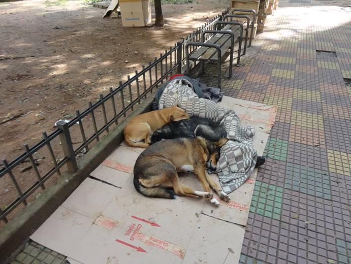 http://www.noticiasespiritas.com.br/2013/DEZEMBRO/10-12-2013_arquivos/image005.jpg