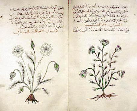 File:Arabic herbal medicine guidebook.jpeg